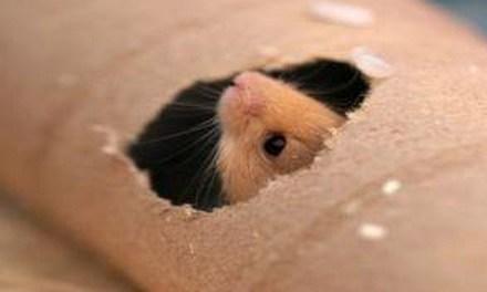 hamster toilet roll