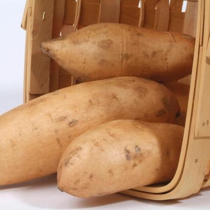 Sweet potato varieties shot in the studio for Don Labonte