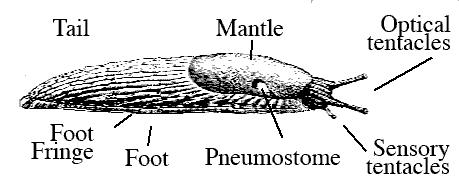 Slug_parts.png